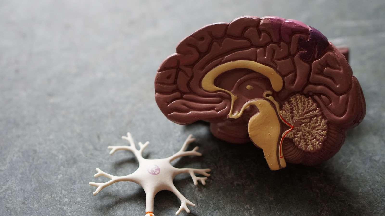 Buddah's Brain